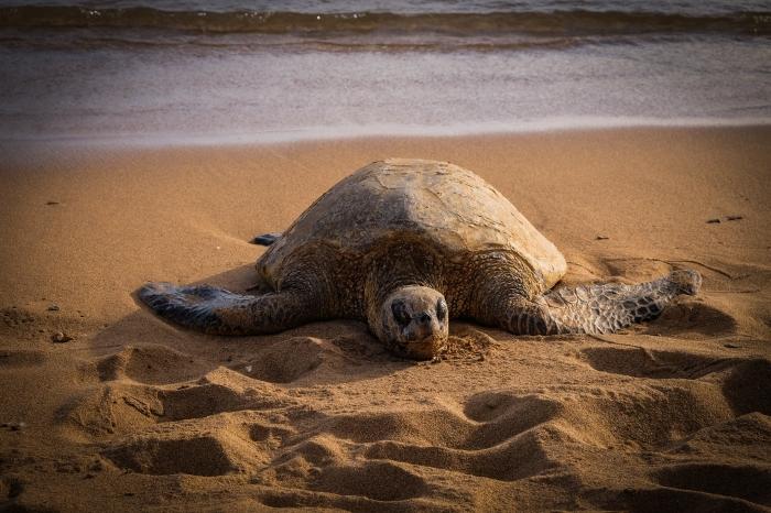 salt-pond-turtle-1