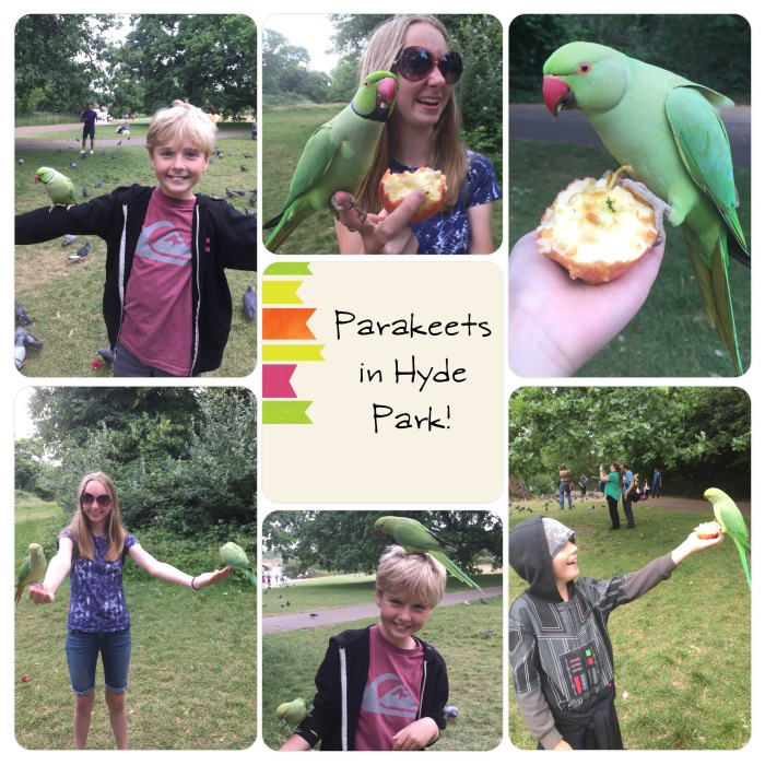 180620_Parakeets-In-Hyde-Park-